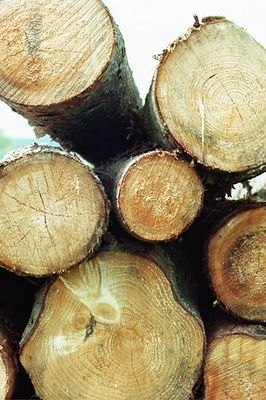 Für unendliche Holzvorräte - brauchen wir unendlich viel Wald !!!