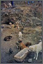 Für uns fällt immer etwas ab. Kloster Tashilumpo, Shigatse Tibet