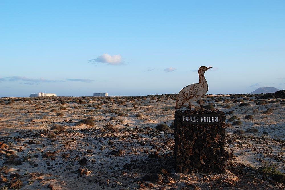 Fuerteventura 2008 III