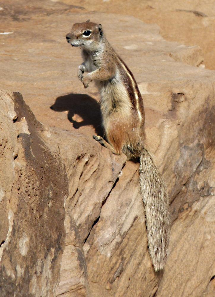 ...Fuerteventura 2011...065...