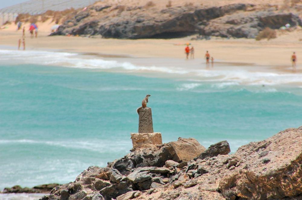 Fuerteventura - Costa Calma Juli 2005