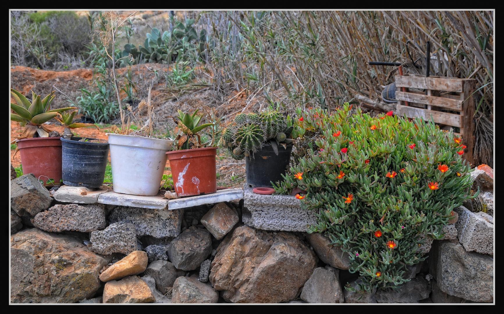 Fuerteventura - Hausgarten