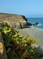 Fuerteventura Impression Juni-Juli 2013 Nr. 26