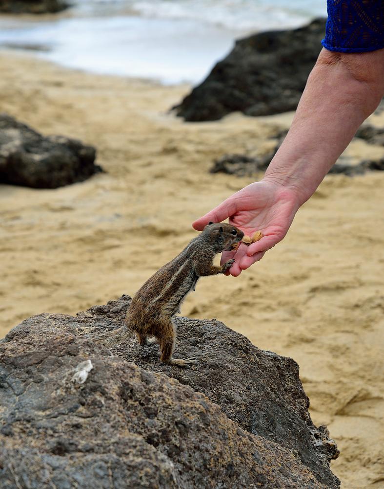Fuerteventura Impression Juni-Juli 2013 Nr.34. - Costa Calma -