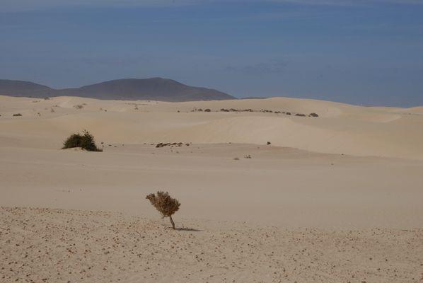 Fuerteventura VI