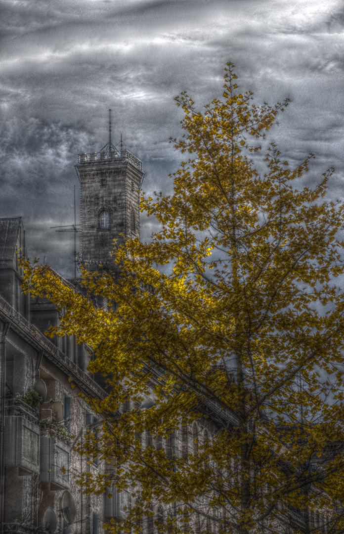 Fürther Rathausturm hinter herbstlichen Ginko