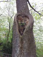 Fürther Stadtpark-Herz