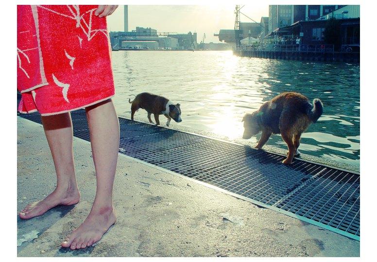 füße mit hunden
