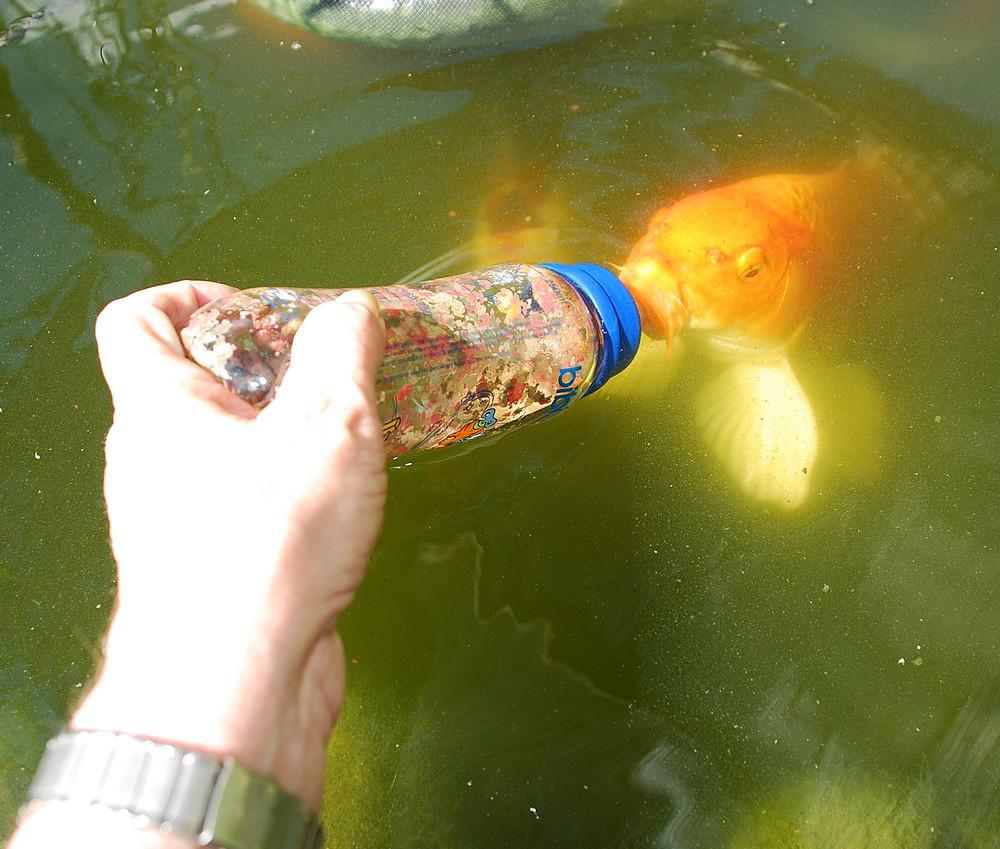 Füterung mit der BabyFlasche