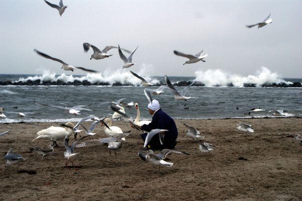 Fütterung am Strand - Ostsee Damp