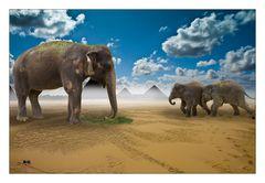 Fütterung der Elefantenkinder