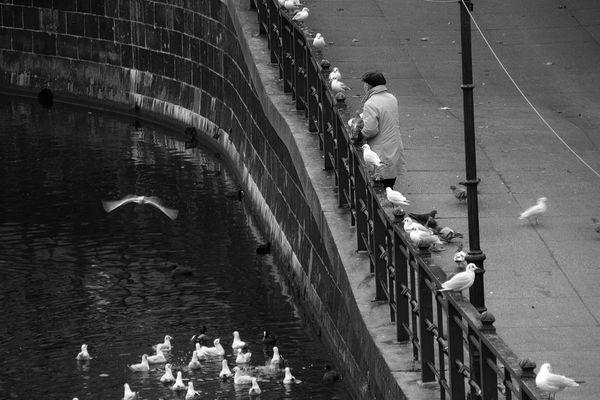Fütterung der Vögel