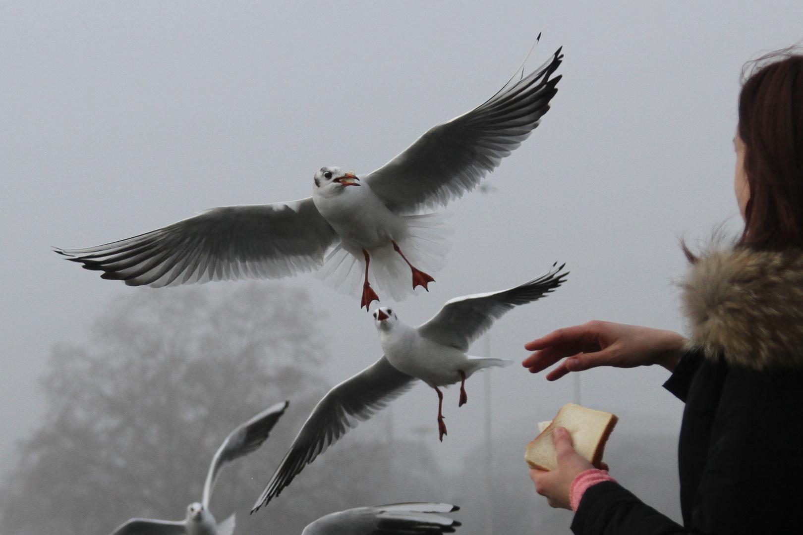 Fütterung im Fluge