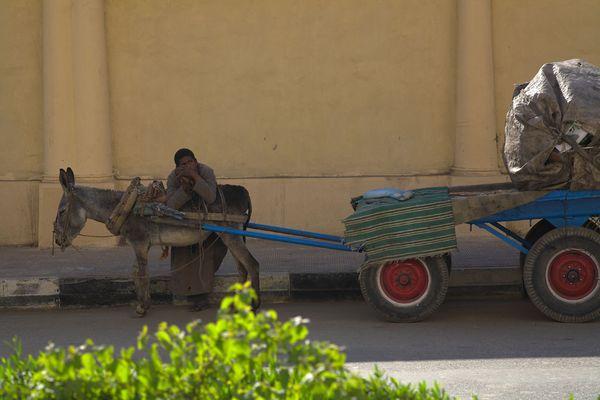 Fuhrwerk in Luxor