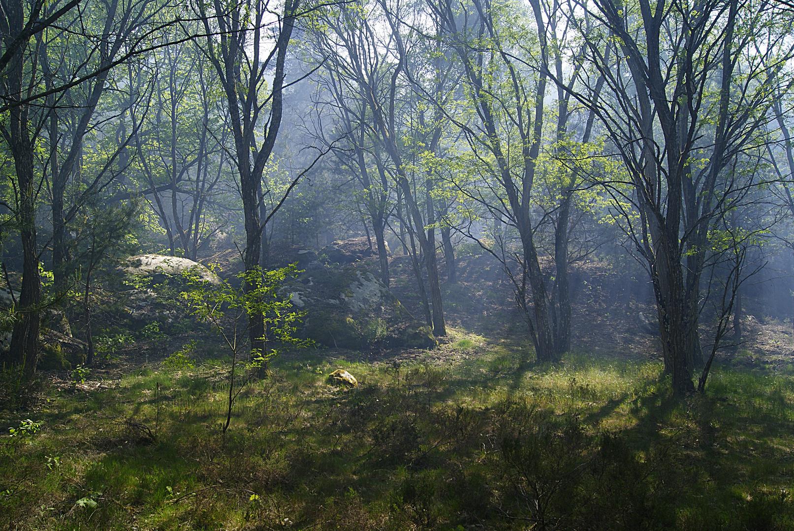 Fumée d'incendie, massif des trois pignons