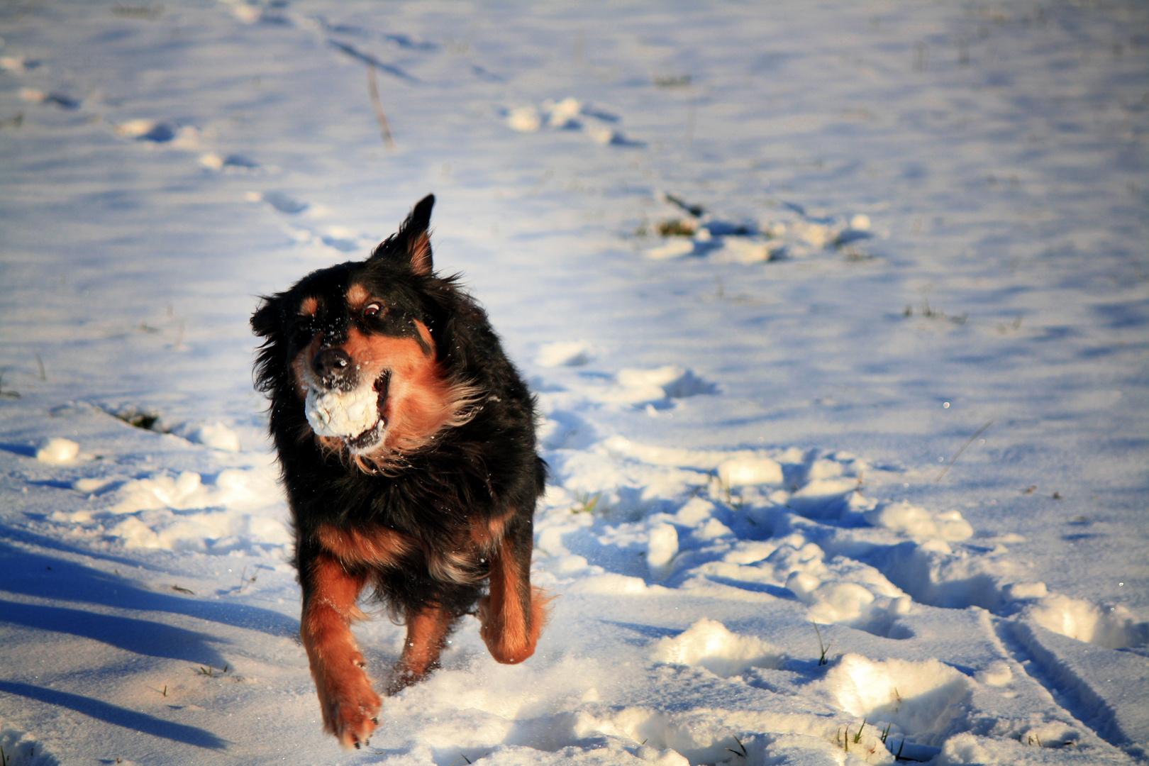 Fun in the Snow II
