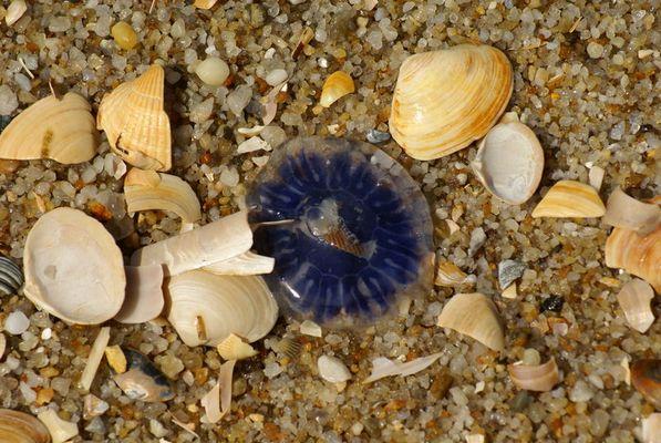 Fundsache am Strand