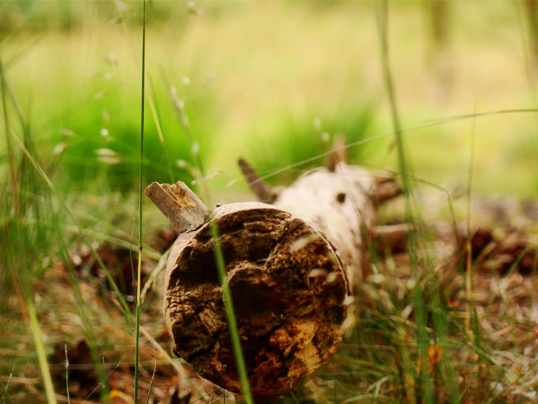 -Fundstück im Wald-