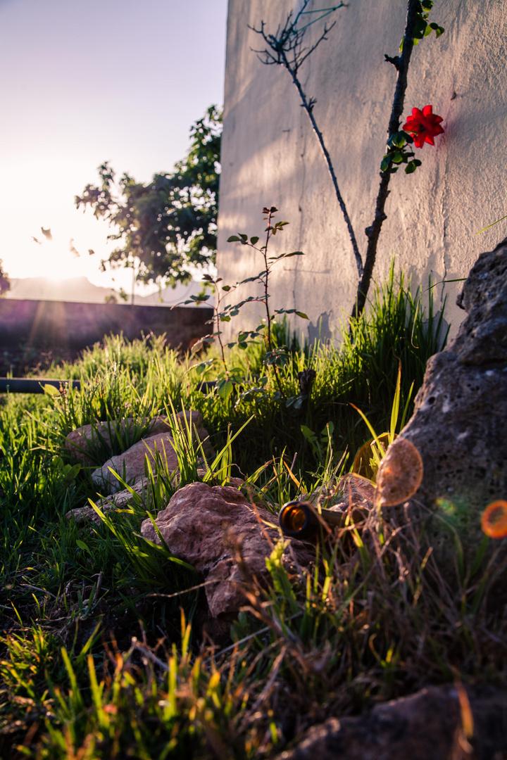 Fundstücke hinter dem Haus