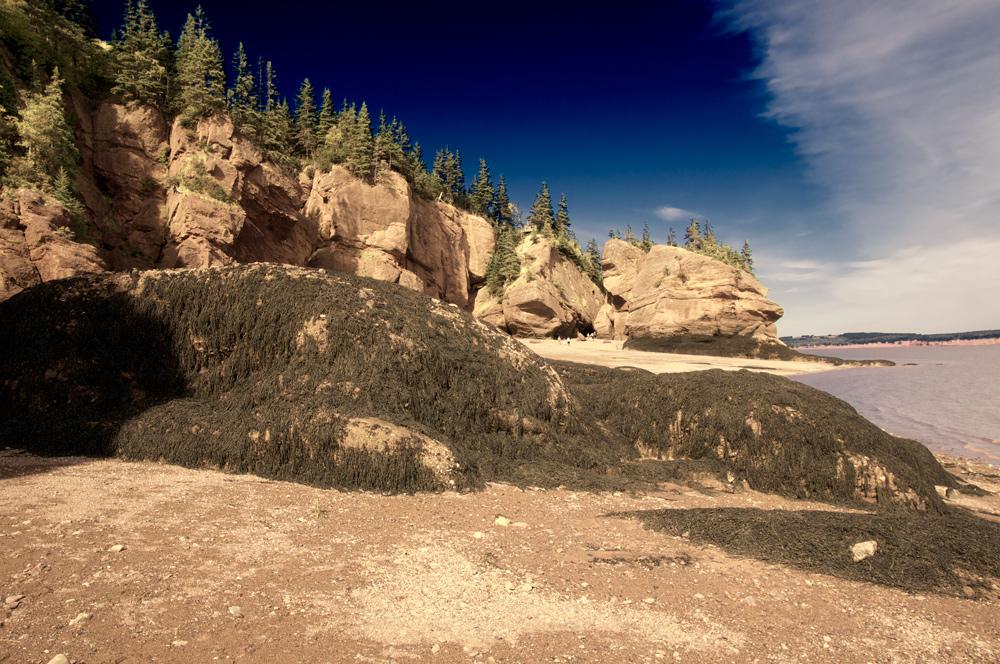 fundy bay - hopewell rocks