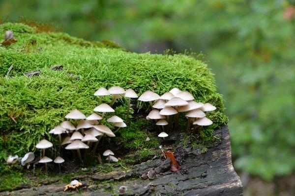 funghi :)