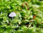 Fungi #11 2007