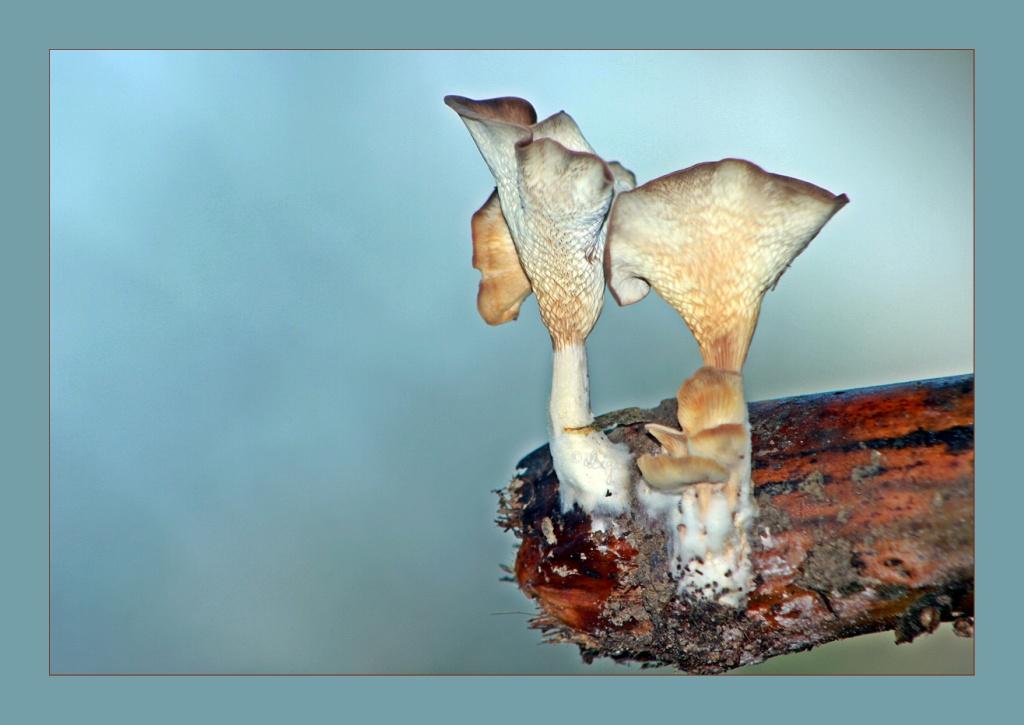 Fungi~