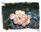 fungi4