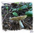 fungi5