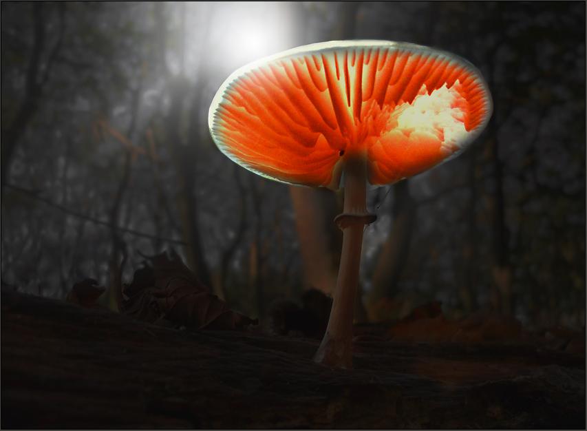 Fungus Furiosus ...