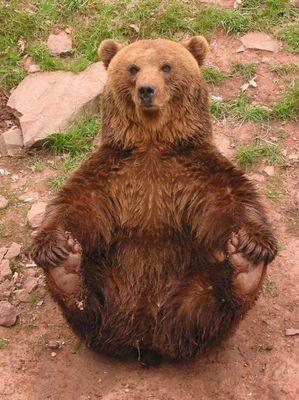 Funny Bär