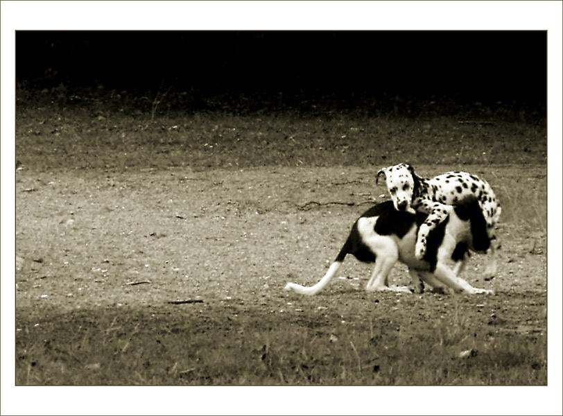 funny doggies ...