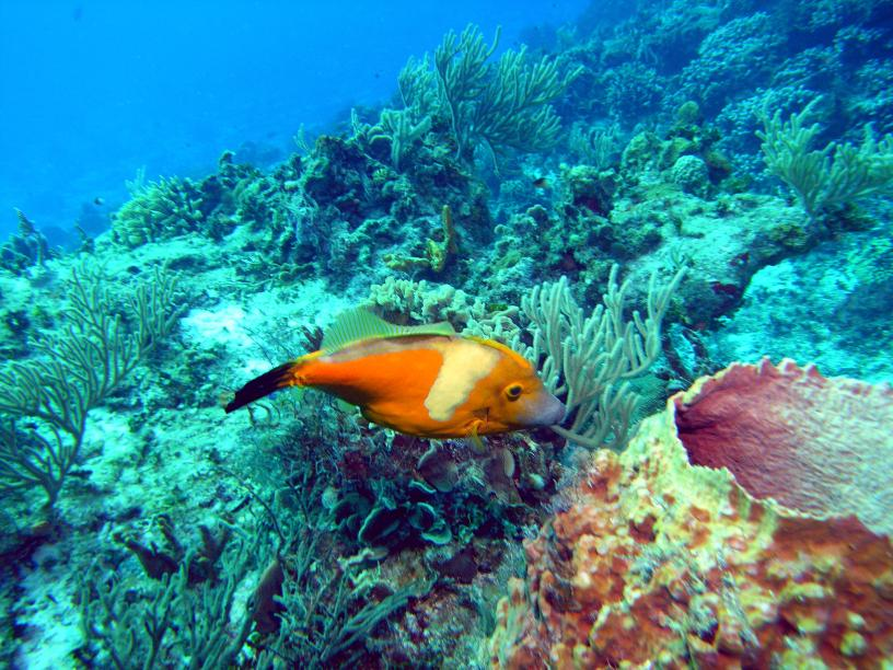 Funny Fish from Cozumel/Mexico