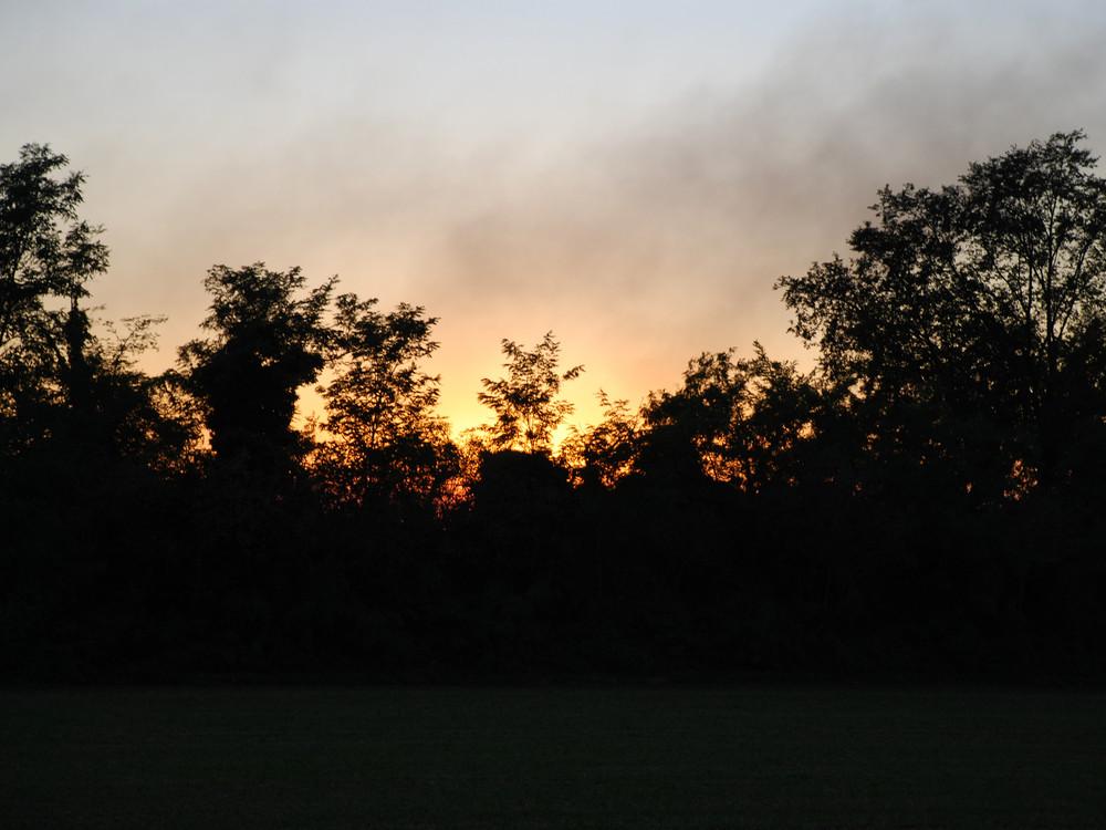 fuoco dietro agli alberi