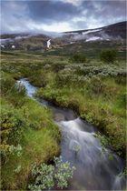 Furuhaugli - Dovrefjell