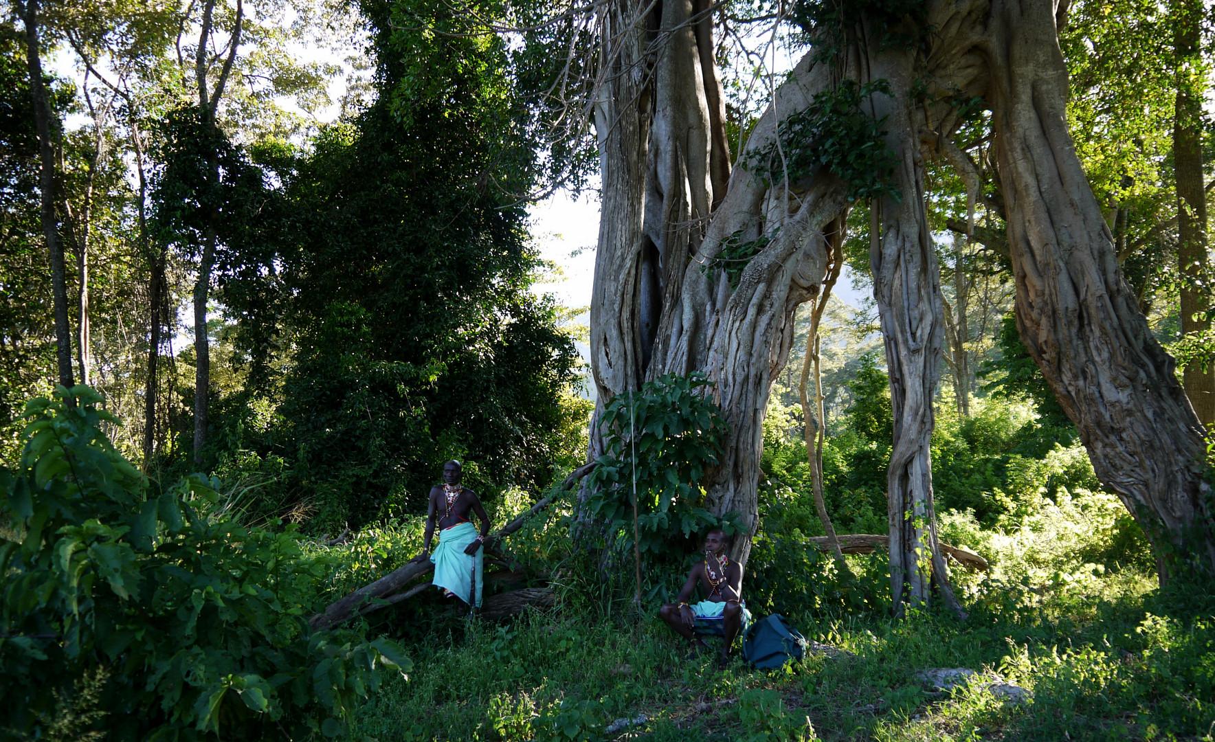 Fuss-Safari im Bergwald , Nord Kenia