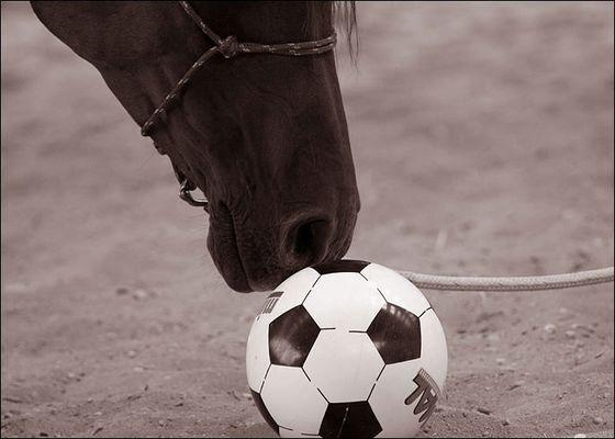 Fußball Freund?