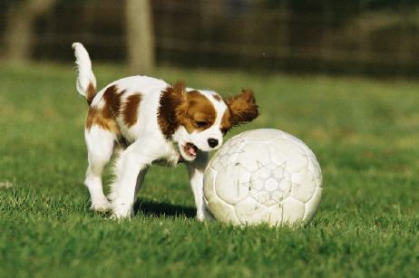 Fußball macht Spaß...