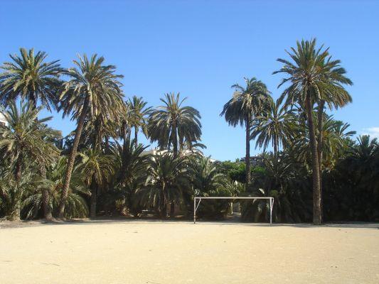 Fussball unter Palmen in Elx