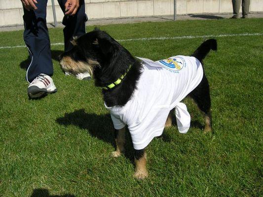 Fußballmaskottchen Benny vom 1.FFC Montabaur