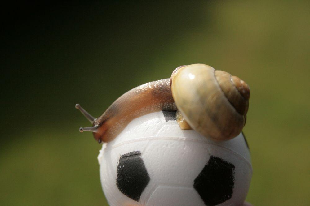 Fussballschnecke