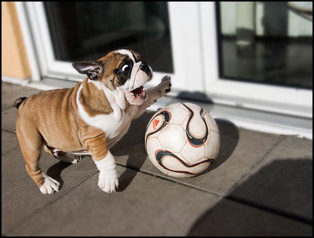 **Fussballstar**