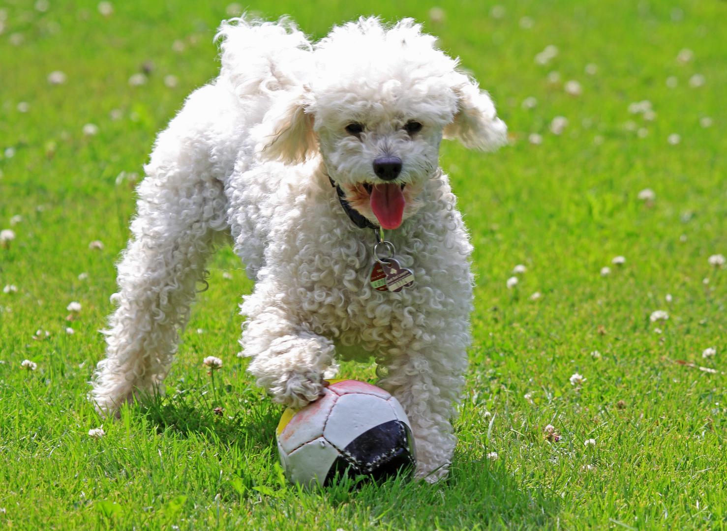 Fußballstar