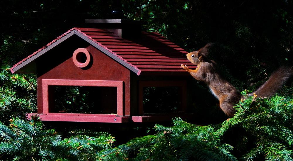 Futterhaus 3_Eichhörnchen