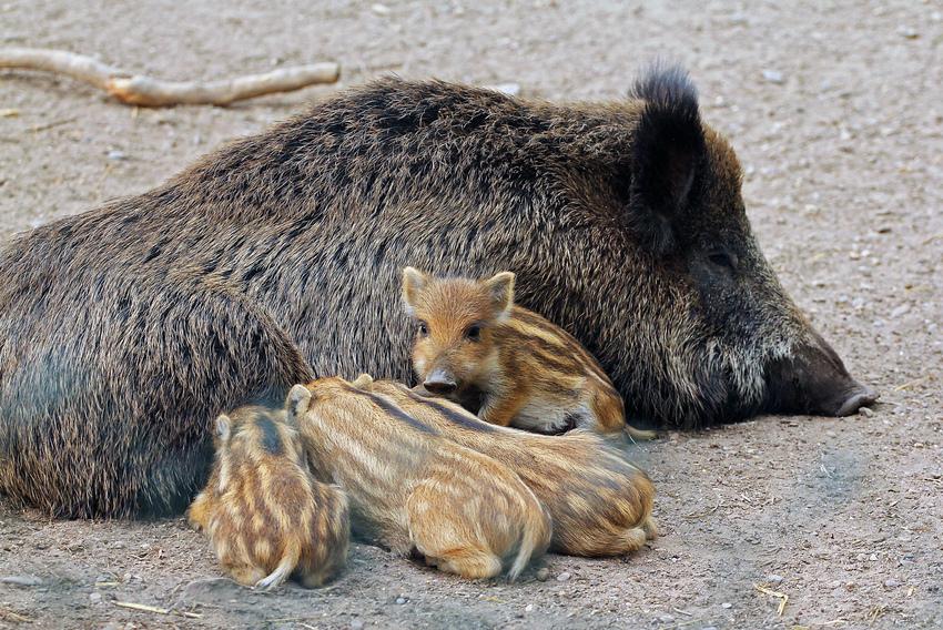 Futtern bei Muttern