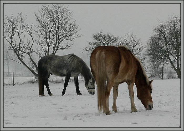 Futtersuche im Schnee!!