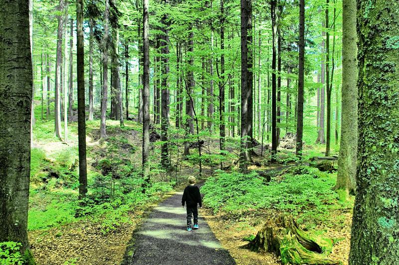 Fynn im Märchenwald