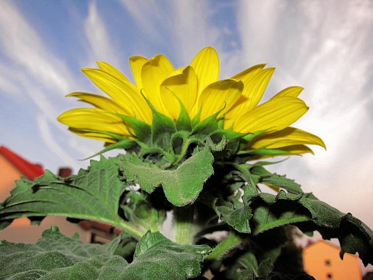 *g* der Himmel über Hannover durch die Blume gesehen ...