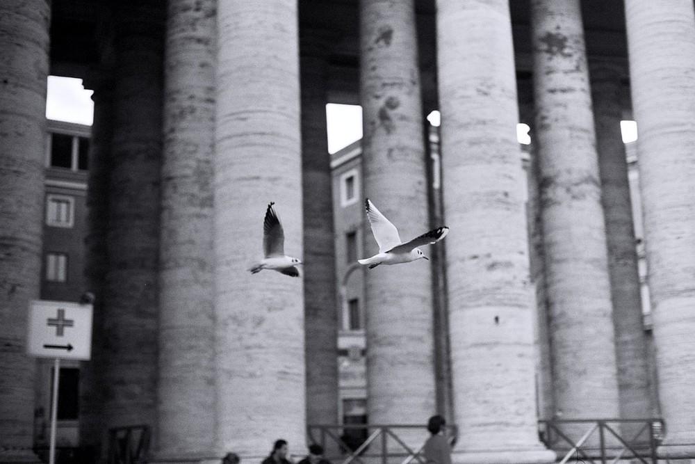 Gabbiani a San Pietro