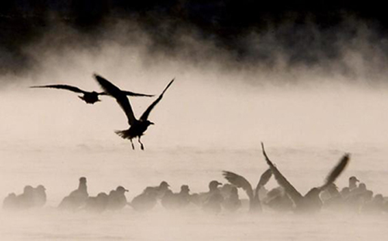 Gabbiani nella nebbia